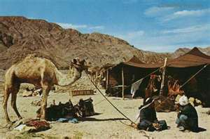 Camel and tent